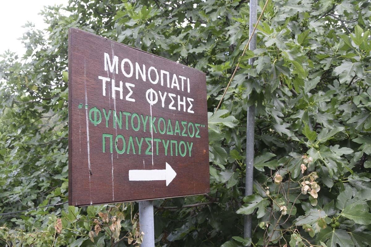 monopati_fysis4